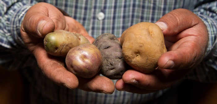 "Boring. In the history of humankind, nobody has ever said ""I hope to see a photo of a man holding potatoes today."""